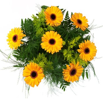 Darling Daises in Yellow Bouquet